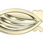 Seashell-YG